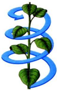 Fillotassi spirale fibonacci